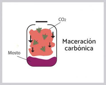 maceracion_carbonica