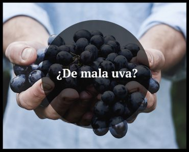 ¿De mala uva? Monovarietales de uvas autóctonas