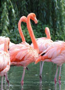 Vino y animales: flamenco