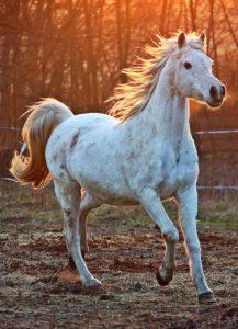 Vino y animales: caballo